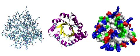 Because proteins are so complex, they need to be viewed in different ways.  This illustration shows three of the ways a protein can be viewed by chemists.  (click for credit)