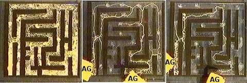 "A slime mold chooses the shortest path to the food (labelled ""AG"") in a maze.  (Image is from the article being discussed.)"