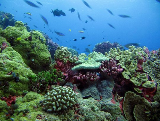 A coral reef in the Phoenix Islands Protected Area, near Coral Castles (click for credit)